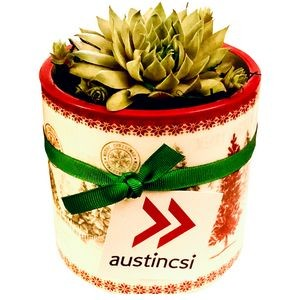 Assorted Succulents in Holiday Tree Ceramic Pot